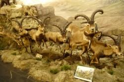 Valdehuesa. Museo de la Fauna Salvaje