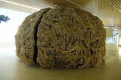 Burgos. Cerebro no Museo de la Evolución Humana.